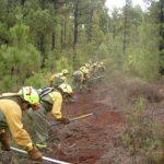 Plan local de prevención de incendios forestales - Actuaciones
