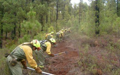 Plan local de prevención de incendios forestales – Actuaciones